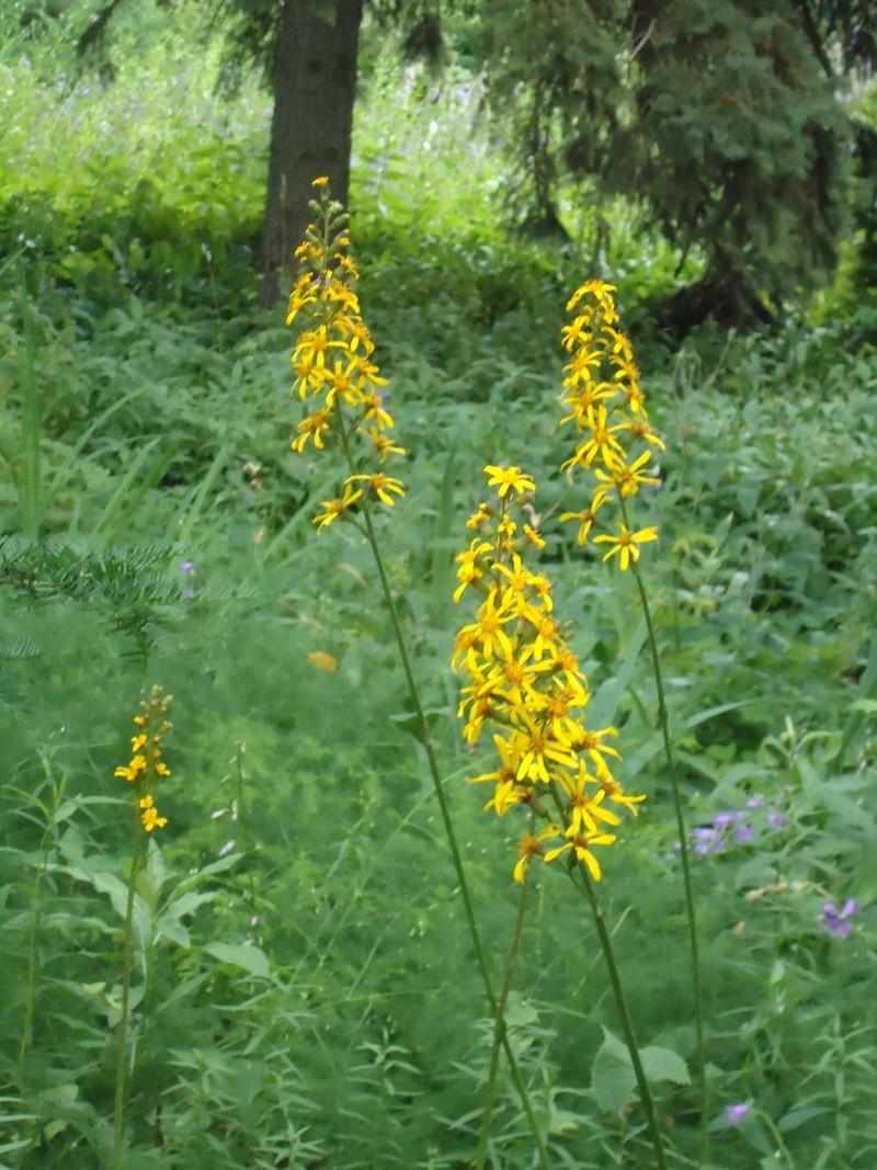 Самара: Ботанический Сад - Страница 2 Dsc04920