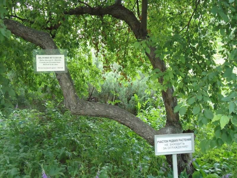 Самара: Ботанический Сад - Страница 2 Dsc04921