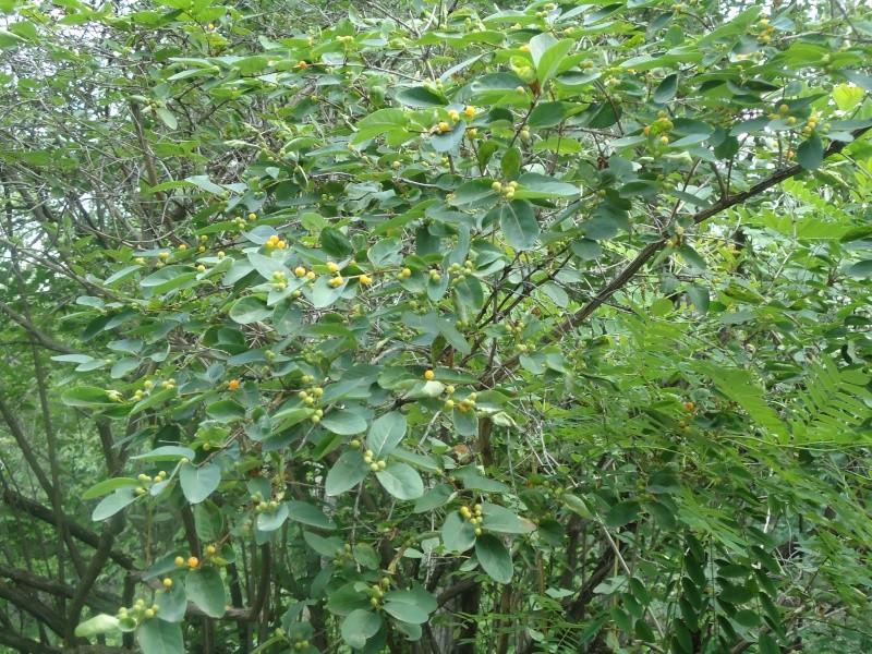 Самара: Ботанический Сад - Страница 2 Dsc04922