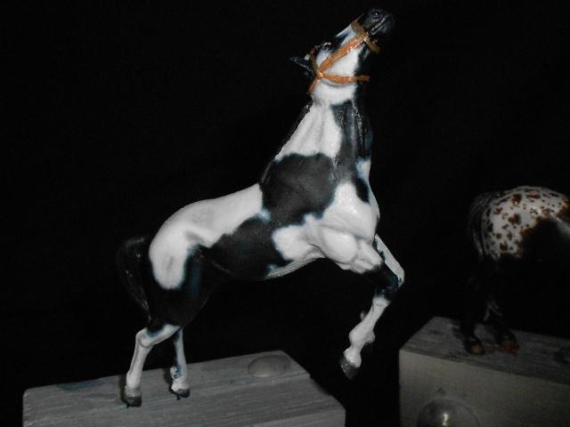 le voleur de chevaux Rscn0510