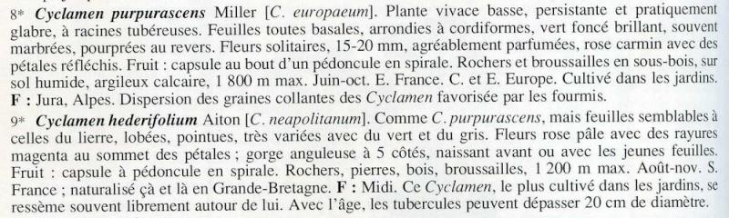 cyclamen de naples Cycl0010