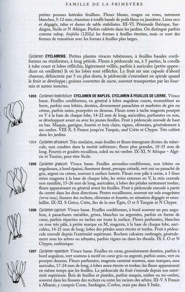 cyclamen de naples - Page 2 Cycl0012