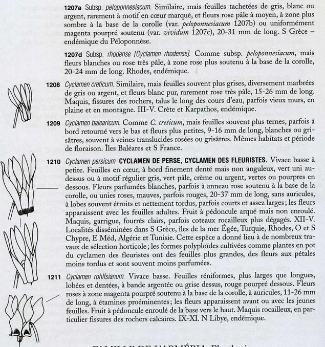 cyclamen de naples - Page 2 Cycl0013