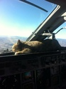 Chat pilote Chat-e10