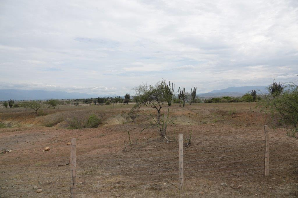 LE DESERT DE TATACOA Dsc01616