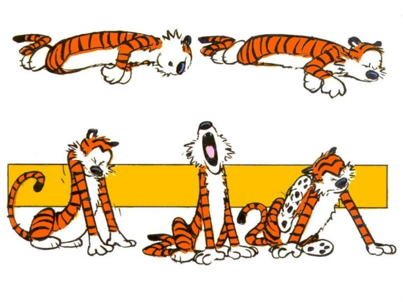 Quand les chats s'invitent dans les livres ... Calvin10