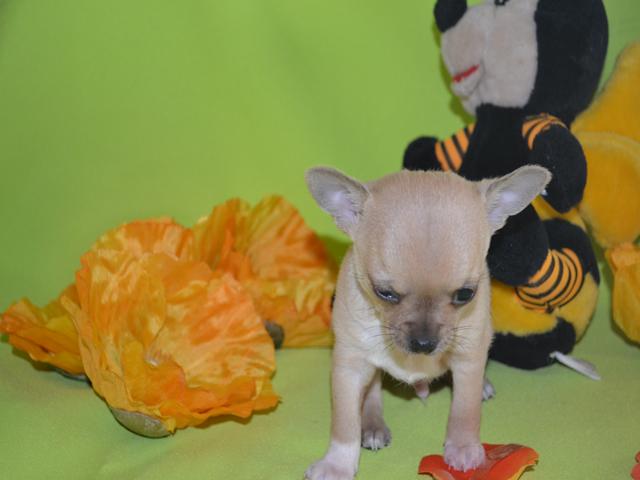 un petit mâle née le 5-2 2012 5_sema14