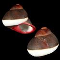 Propositions & avancées dans le forum des mollusques continentaux. - Page 3 Acavid10