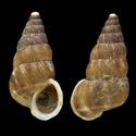 Propositions & avancées dans le forum des mollusques continentaux. Cochlo10