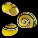 Propositions & avancées dans le forum des mollusques continentaux. Helmin10