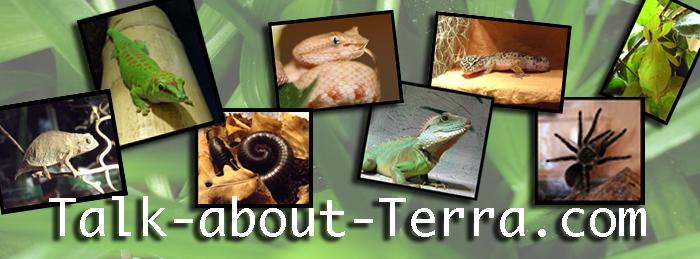 Talk-about-Terra - freundlich und hilfreich - das Reptilienforum