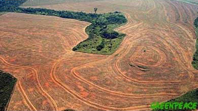 Se triplicó la deforestación en el Amazonas brasileño Defore10