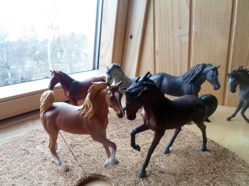 Nice CollectA Horses 2011-2012 has broke my heart! ;) Sam_2113