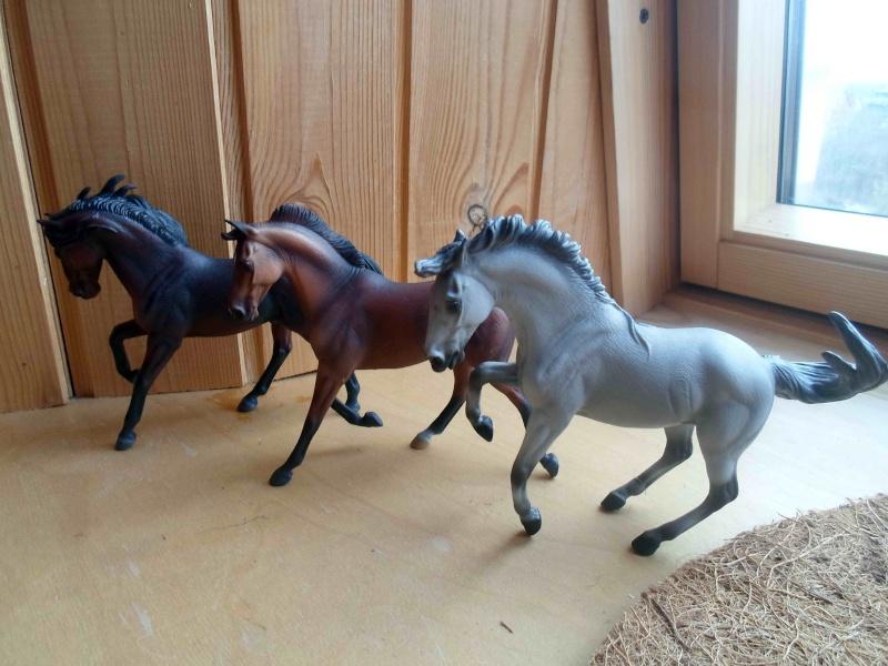Nice CollectA Horses 2011-2012 has broke my heart! ;) Sam_2114
