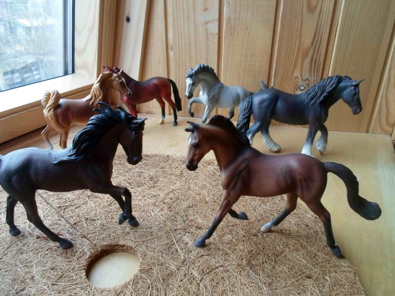 Nice CollectA Horses 2011-2012 has broke my heart! ;) Sam_2115