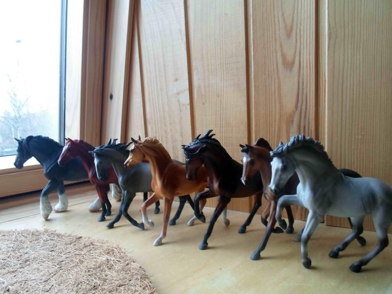 Nice CollectA Horses 2011-2012 has broke my heart! ;) Sam_2116