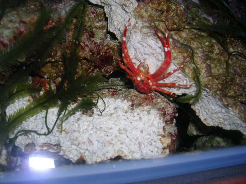 Vos photos pour le plaisir des yeux - Page 4 Crabe_10