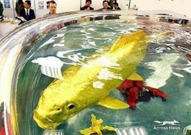 سبحان الله يخلق مايشاء وبقدر : سمكة حقيقية من الذهب عيار 24 18579210