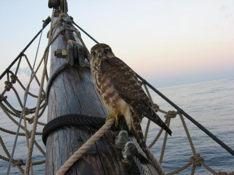 Les plus belle photos du HMS Bounty - Page 2 30071310