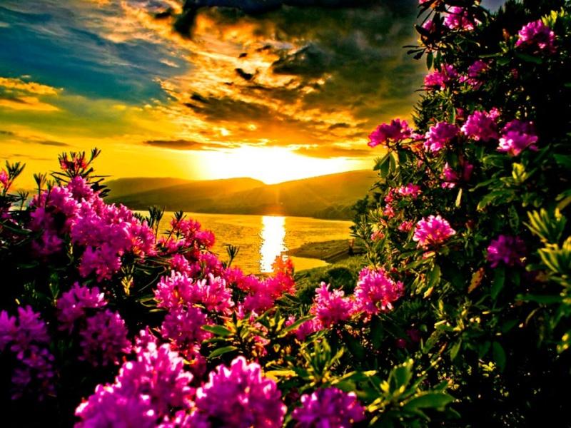 les plus belle photos de couchers de soleil - Page 3 30333510