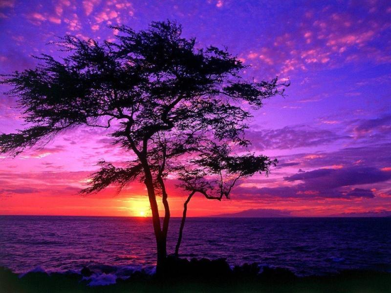 les plus belle photos de couchers de soleil - Page 3 53209511