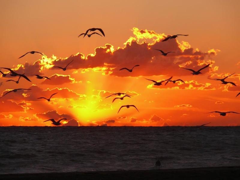 les plus belle photos de couchers de soleil - Page 3 54081810