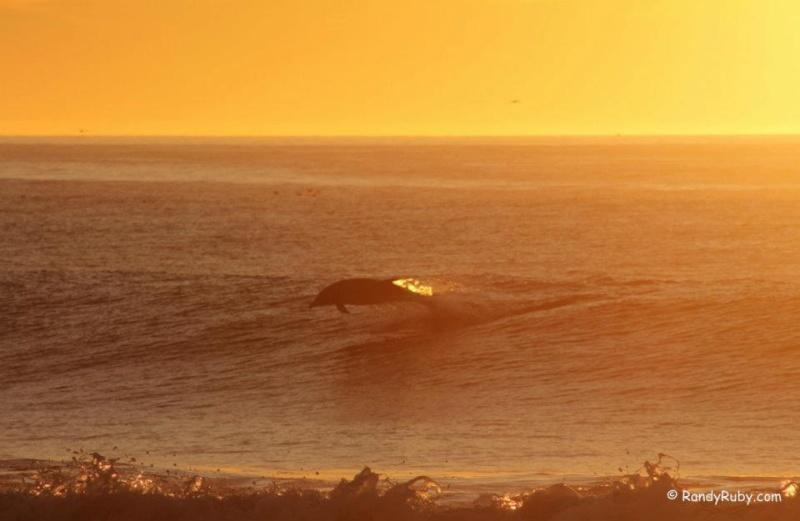 les plus belle photos de couchers de soleil - Page 6 60124110