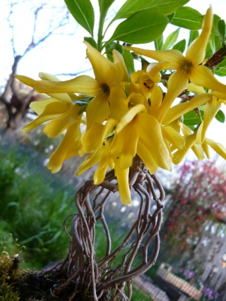la bellezza della primavera ... P1000511