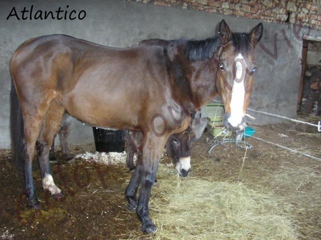 ATLANTICO - PSA né en 2001 - adopté en juillet 2012 par domgalou Atlant10