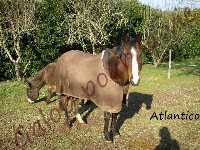 ATLANTICO - PSA né en 2001 - adopté en juillet 2012 par domgalou Atlant11
