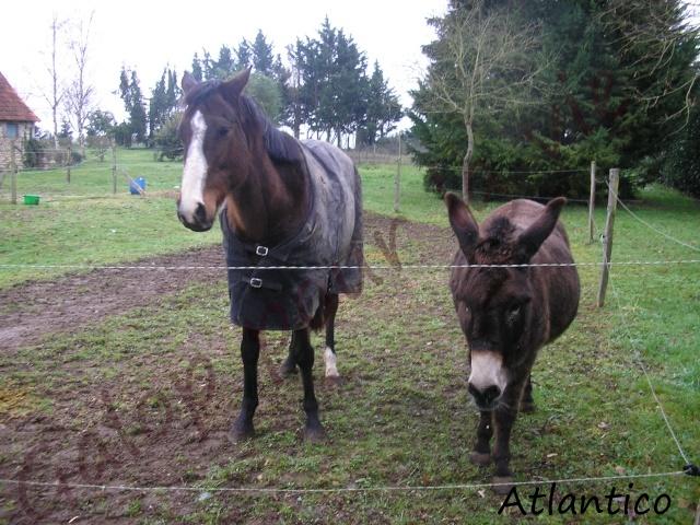 ATLANTICO - PSA né en 2001 - adopté en juillet 2012 par domgalou Atlant12