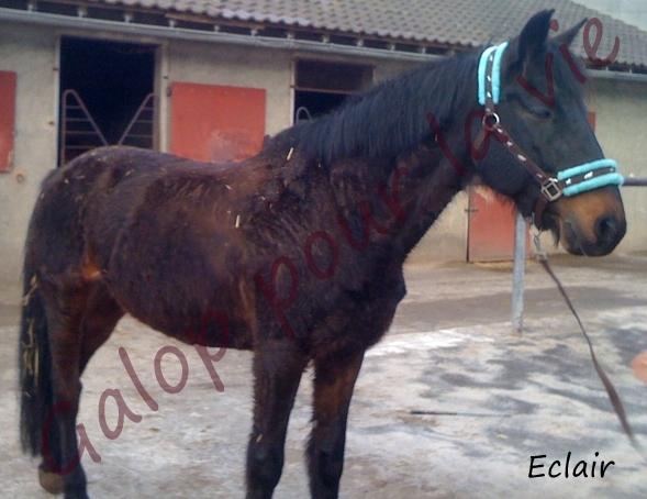 ECLAIR - TF né en 1992 - adopté en 2012 par dolo01 Eclair10