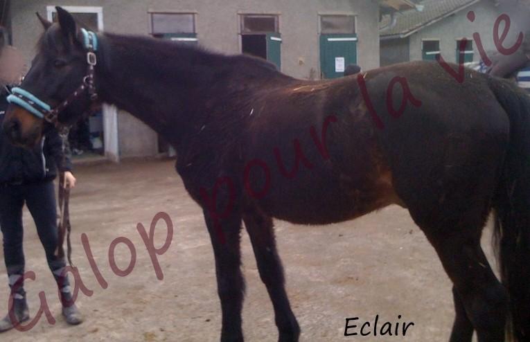 ECLAIR - TF né en 1992 - adopté en 2012 par dolo01 Eclair12
