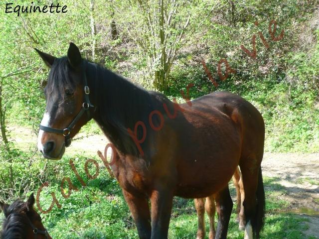 Equinette - restée chez son propriétaire Equine12