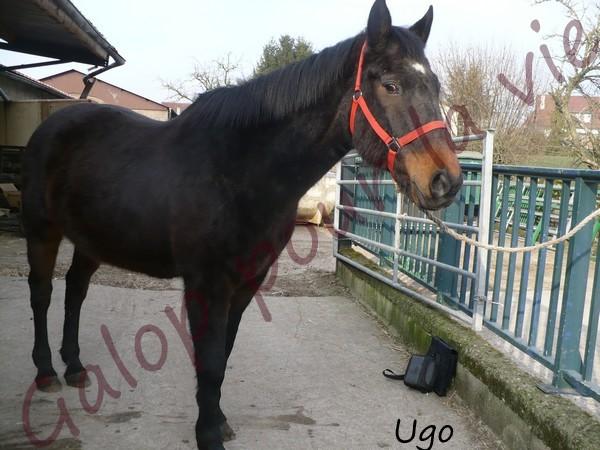 UGO DE LA SELUNE (ugoo)- placé hors association Ugo110