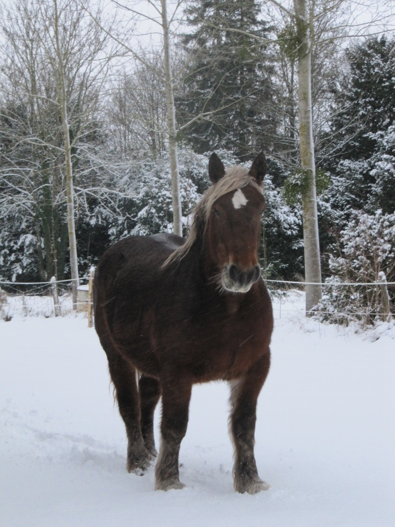 Concours Photos Décembre : Le Cheval et la Neige Img_0310