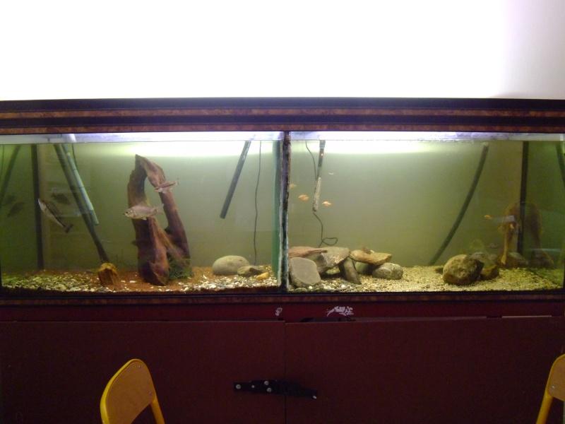 L'aquarium dans la salle de cour P1000120