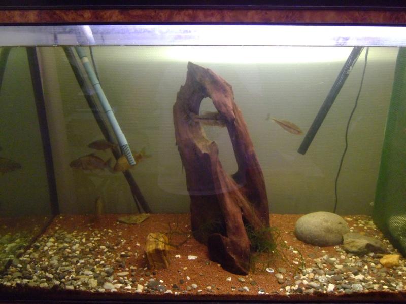 L'aquarium dans la salle de cour P1000121