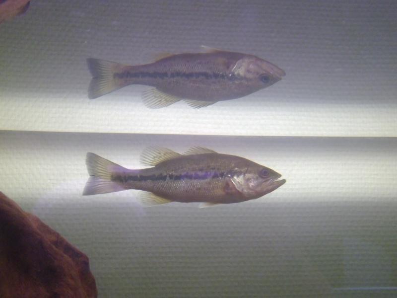 L'aquarium dans la salle de cour P1000123