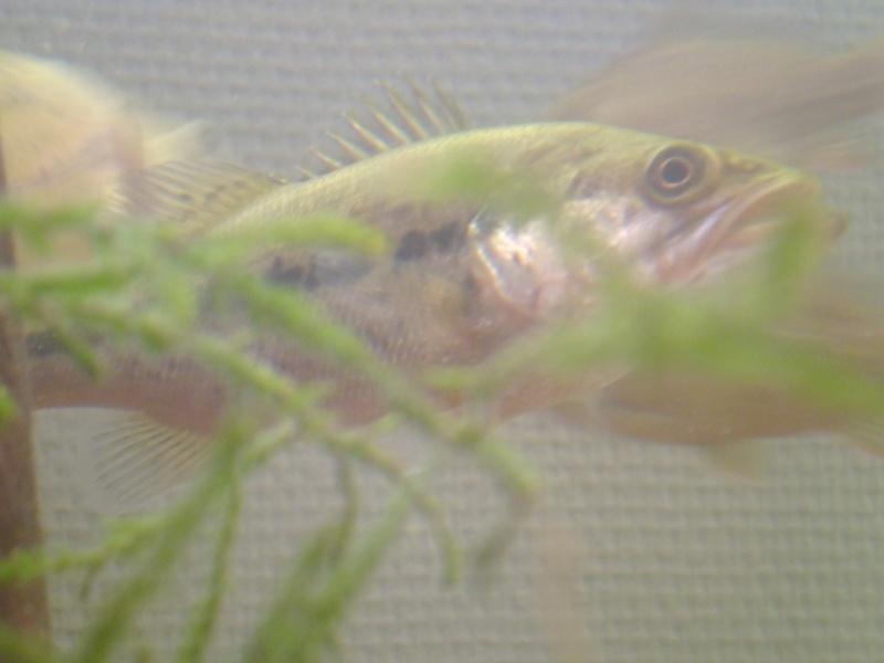 L'aquarium dans la salle de cour P1000125