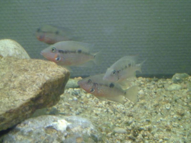 L'aquarium dans la salle de cour P1000127