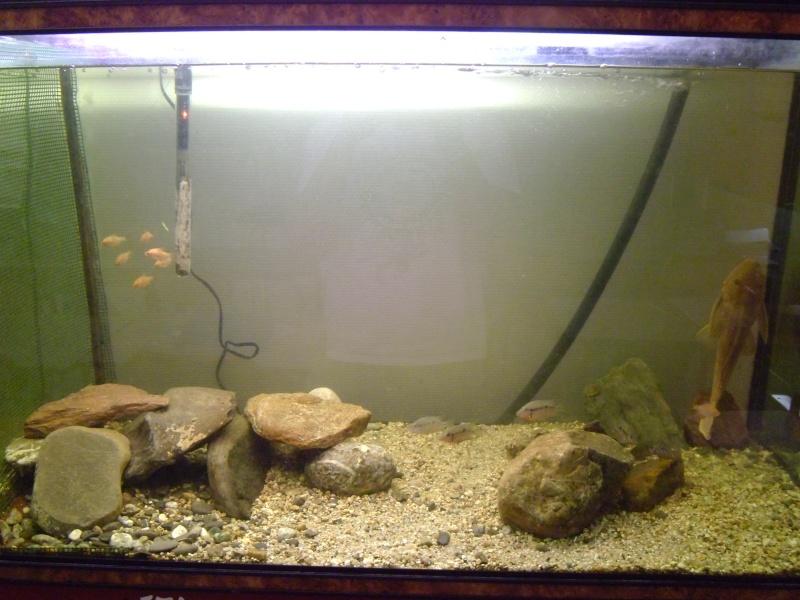 L'aquarium dans la salle de cour P1000130