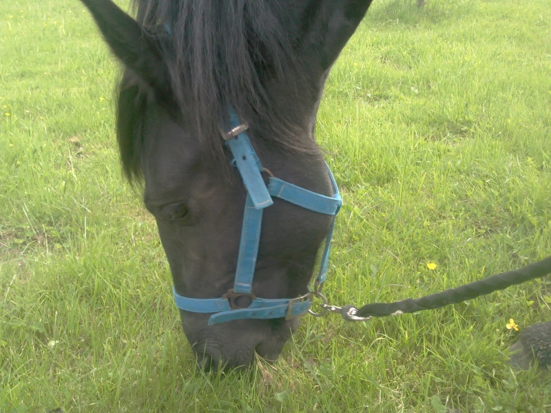 Mes 96 chevaux Photo025