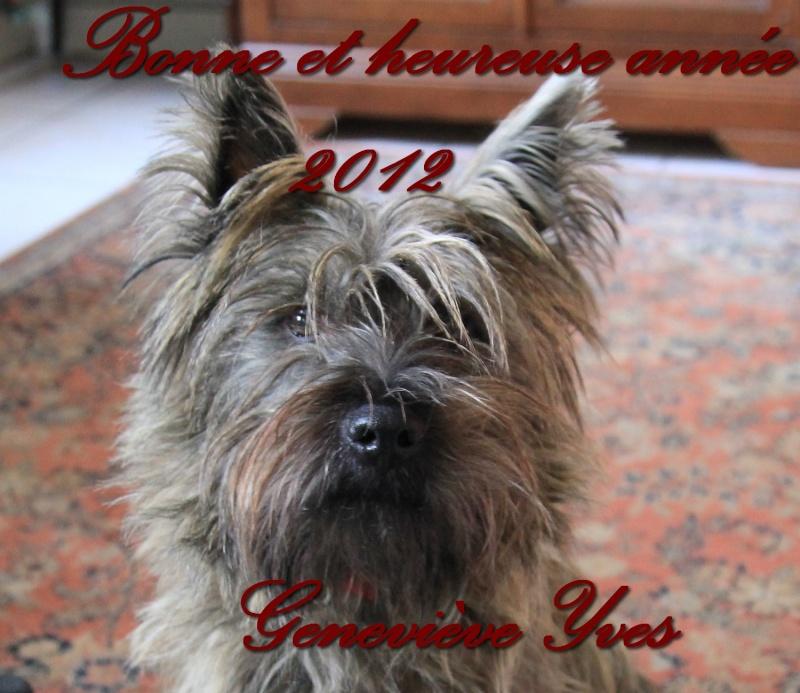 Voeux pour la nouvelle année  01111