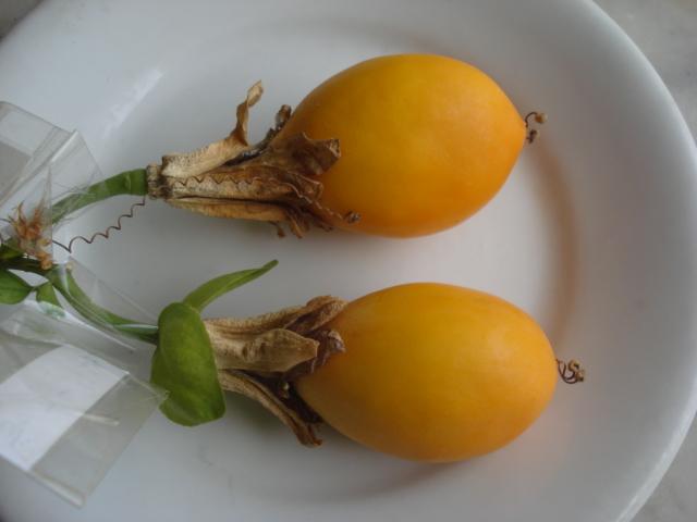 Pasiflora in Morocco 2_frui12