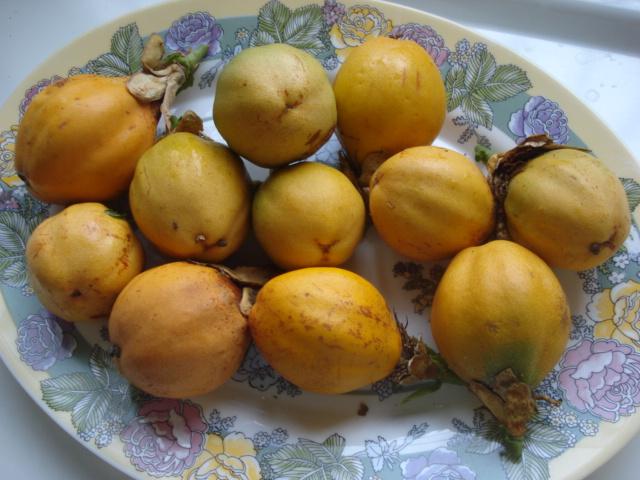 Pasiflora in Morocco Alata-10