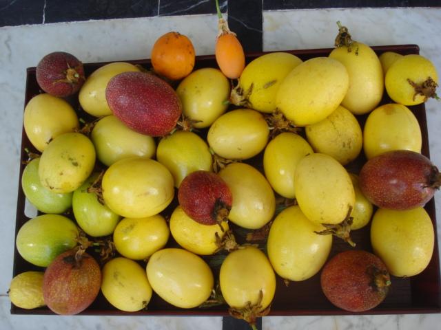 Harvest fruits assiflora Edulis10