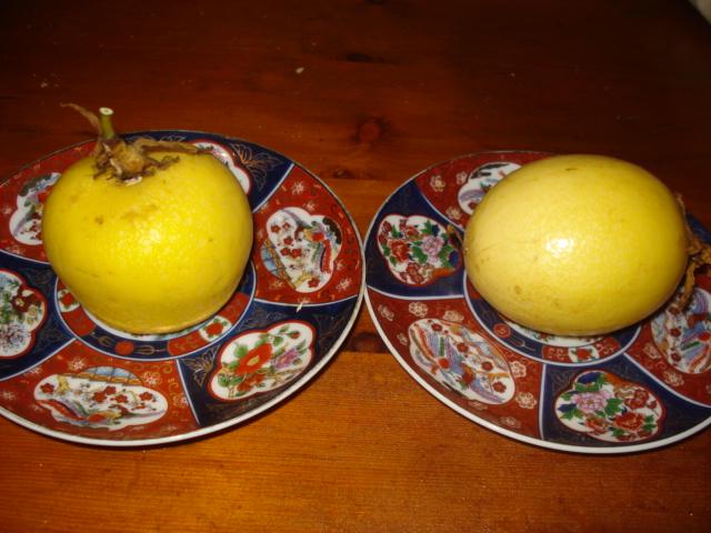 Harvest fruits assiflora Flavi_10