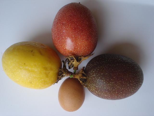 Pasiflora in Morocco Fruits10