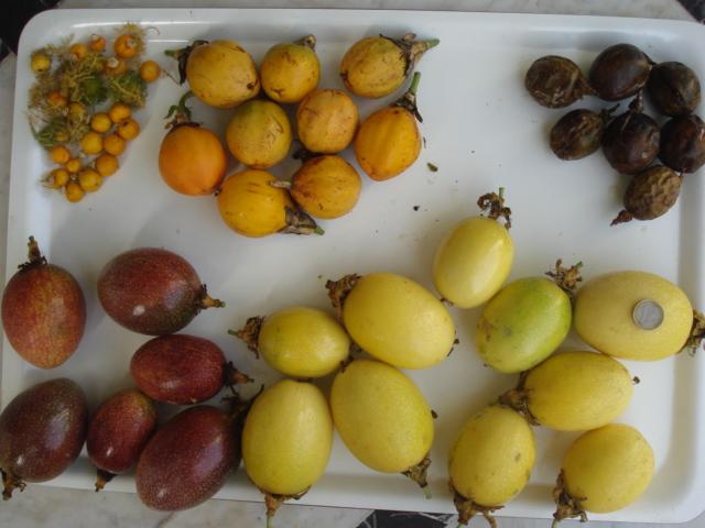 Pasiflora in Morocco Racolt10